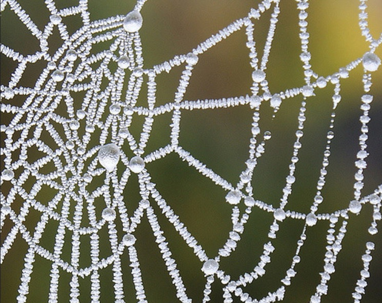 Icy spiderweb