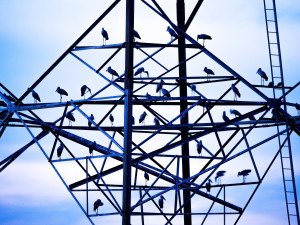 Birds on electrical tower