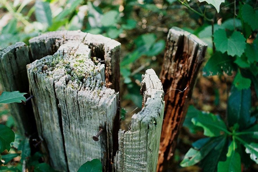 Tree stump