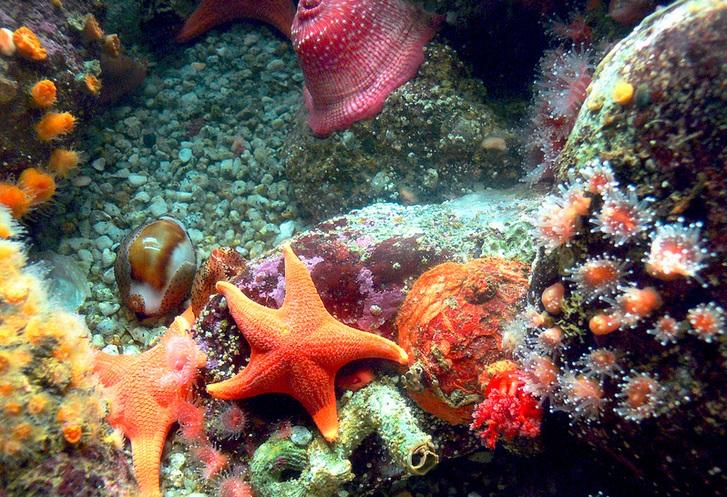 Coral at the Monterey Aquarium