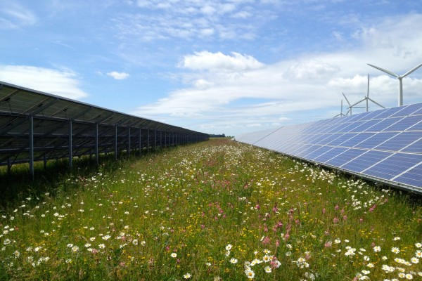 Flowers grow between solar panels